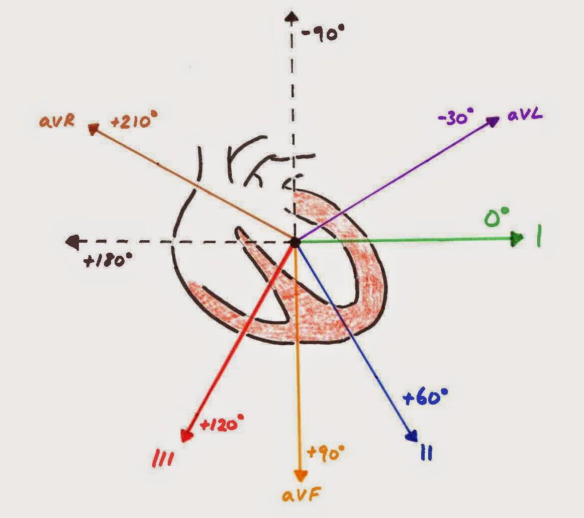 standard ekg diagram gm one wire alternator hunting the culprit properly understanding ecg leads