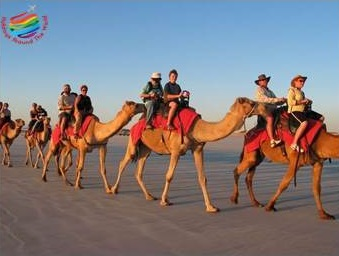 Camel Rides - Hurghada