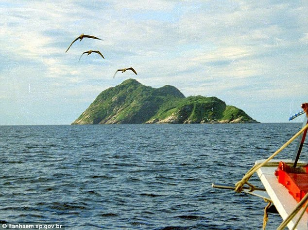 Snakes on the island have evolved to pick birds out of the sky with their venom. Stupid birds. Don't they know Brazil says the place is off limits? - There's A Place Called Snake Island And It's Even More Terrifying Than You Think. Trust Me.