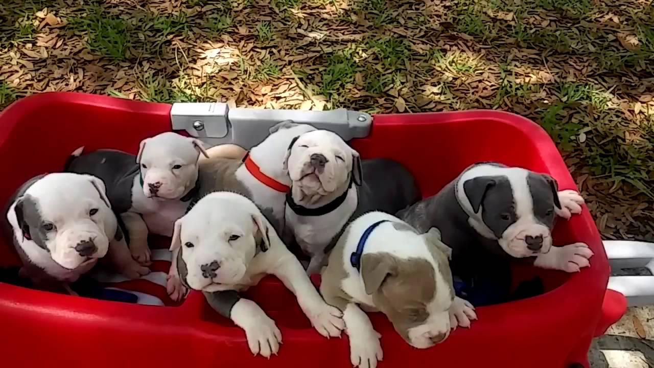 Morsorosso 11 passi per lavorare con un allevamento di cani for Lavorare con i cani