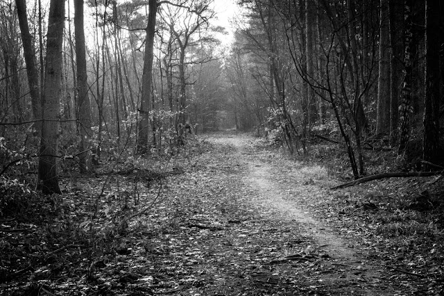 Dark Path Photo by Peter Hall on Unsplash