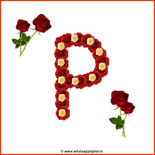 rose-flower-p-image