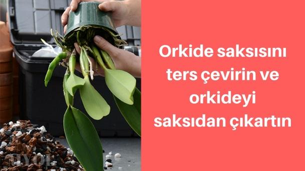 orkide saksı değişimi orkideyi saksıdan çıkartma