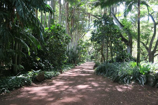 a guide to northeastern gardening allerton tropical botanical