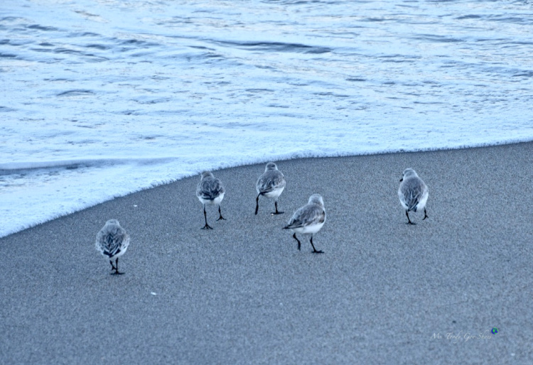 Sandpipers, Boca Raton, FL  | Ms. Toody Goo Shoes