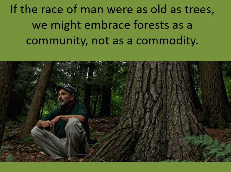 Weedpicker's Journal:: Forests as communities, not commodities