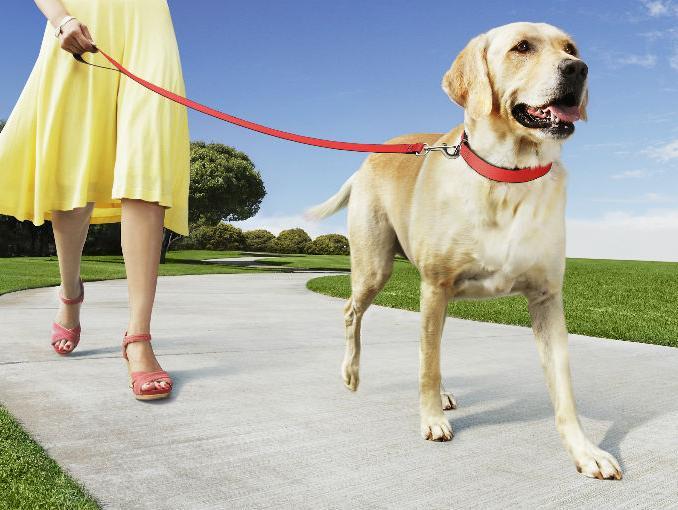 Quitale los miedos a tu perro