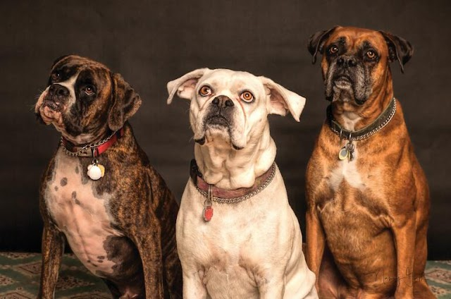 Dog Prices in India 2021 (200+ Dog Breeds)