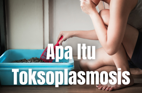 Apa Itu Toksoplasmosis : Pengertian, Tanda dan Gejala, Penyebab, Faktor Risiko Pengertian Toksoplasmosis Toksoplasmosis merupakan suatu infeksi yang disebabkan oleh mikroorganisme yang hidup pada burung, hewan, dan manusia. toksoplasmosis memengaruhi saluran pencernaan (termasuk mulut, kerongkongan, lambung, usus dan anus), jantung, saraf, dan kulit.   Infeksi Toksoplasma paling berbahaya apabila terkena pada ibu hamil dan orang-orang dengan sistem kekebalan tubuh yang rendah seperti yang sedang melakukan kemoterapi, berpenyakit, atau memiliki AIDS.  Anak-anak di bawah 5 tahun akan memerlukan penanganan segera untuk mencegah komplikasi pada bagian mata. Komplikasi lain termasuk peradangan (endema) pada otak, jantung, dan kerusakan paru-paru. Apabila ibu hamil terinfeksi pada tahap awal kehamilan, terdapat kemungkinan untuk keguguran, lahir mati, atau melahirkan bayi yang cacat.  Tanda dan Gejala Toksoplasmosis Kebanyakan orang yang sehat tidak menunjukkan gejala tertentu. Namun ciri yang marak timbul adalah gejala yang mirip seperti flu, termasuk demam, kelelahan, nyeri otot, sakit kepala, dan kelenjar getah bening membengkak.  Jika Anda memiliki HIV/AIDS, sedang menjalani kemoterapi, atau baru menjalani transplantasi sebelum terpapar parasit taxoplasma, terdapat kemungkinan reaktivasi parasit. Dalam hal ini, gejala dan tanda-tandanya akan menunjukkan gejala infeksi yang serius, termasuk: Sakit kepala Kebingungan Koordinasi motorik yang buruk Gerakan tak terduga pada kaki/tangan Masalah kerja pada paru-paru atau pneumonia jiroveci, dan infeksi umum pada pasien dengan AIDS Penglihatan kabur karena infeksi retina yang berat  Beberapa infeksi pada tahap awal kehamilan juga akan menyebabkan keguguran atau kematian janin. Anak yang bertahan hidup pada akhirnya akan memiliki berbagai masalah yang serius seperti: Sering mengalami gerakan tak terduga pada kaki/tangan Pembesaran limpa pada hati Mata dan kulit kuning Infeksi mata yang parah Berkurangnya kualitas pendengaran G