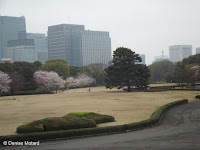 Scenic landscape of Tokyo Imperial Gardens, Japan, with city buildings in background