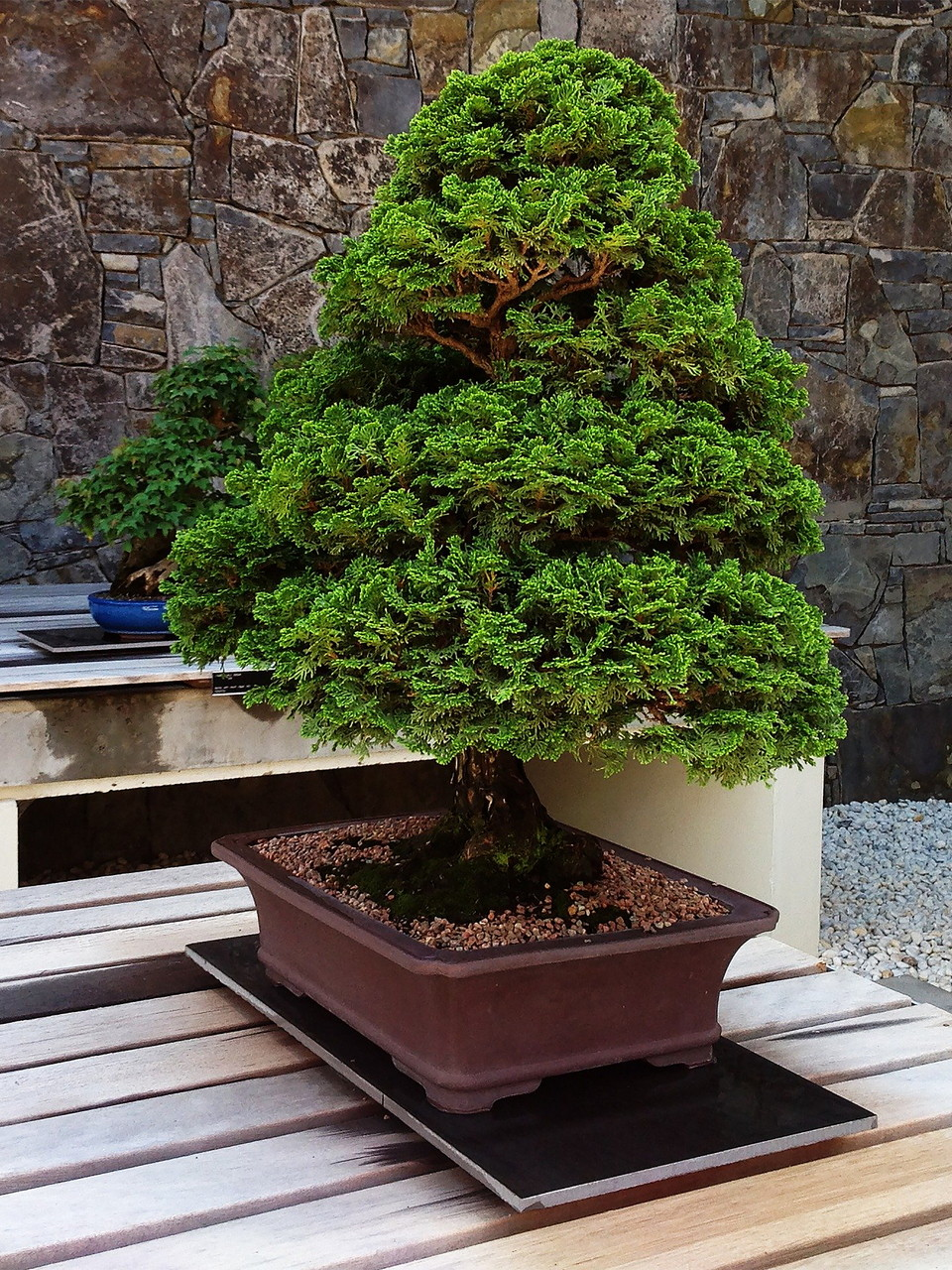 menanam-bakalan-bonsai.jpg