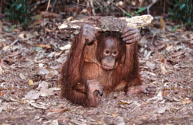Steve Bloom - Wildlife Photography Hide