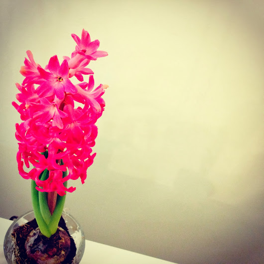 Being Seasonal.....Let Me Introduce You - Hyacinth.
