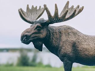 Moose At Sydney Harbour, Cape Breton Island