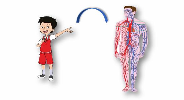 "Materi Kelas 5 SD/MI Bahasa Inggris ""My Blood Circulation is Healthy"""
