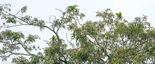 Bando de periquitos em uma árvore