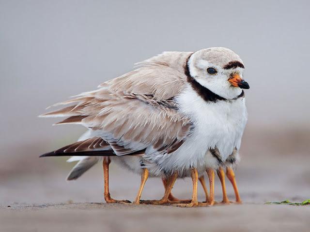 أكثر 30 صورة رائعة للطيور cute-bird-parents-22