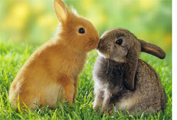 How to caring of Rabbits To Stay Healthy.