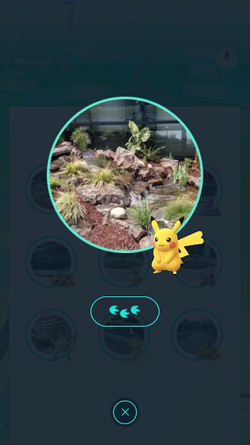 ¡Ya están los géneros en Pokémon GO!, ¡mira este pikachu hembra! 2