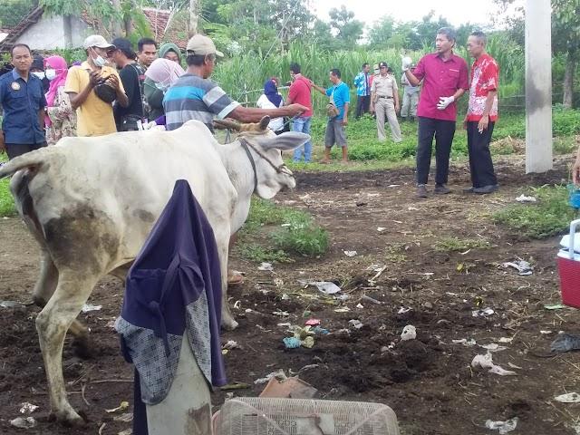 Sembilan Ekor Sapi Milik Warga Mati Tanpa Sebab, DPKH Situbondo Langsung Tinjau Lokasi