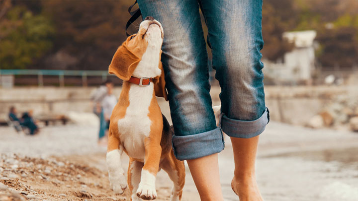 pet-friendly vacations near me