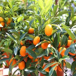 Jual Pohon bibit tanaman buah untuk penghijauan