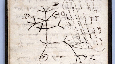 Sketch of phylogeny by Charles Darwin