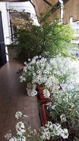 Creare per hobby terrazzi e balconi fioriti for Balconi e terrazzi