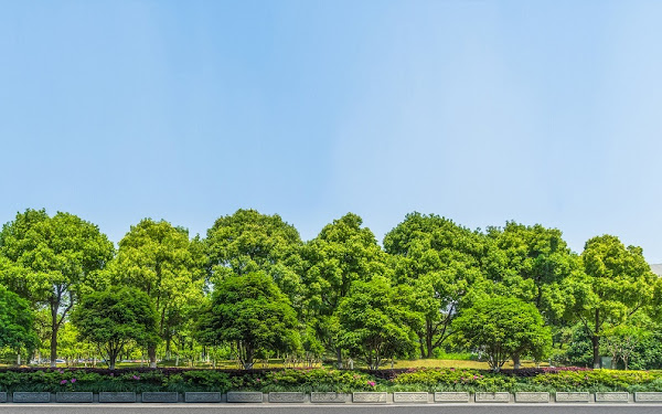 فوائد الاشجار للبئية