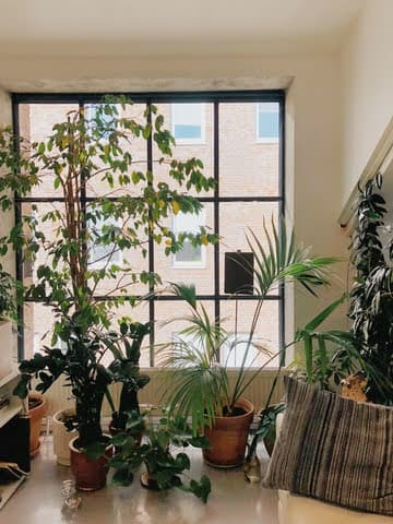 Jardim dentro de casa