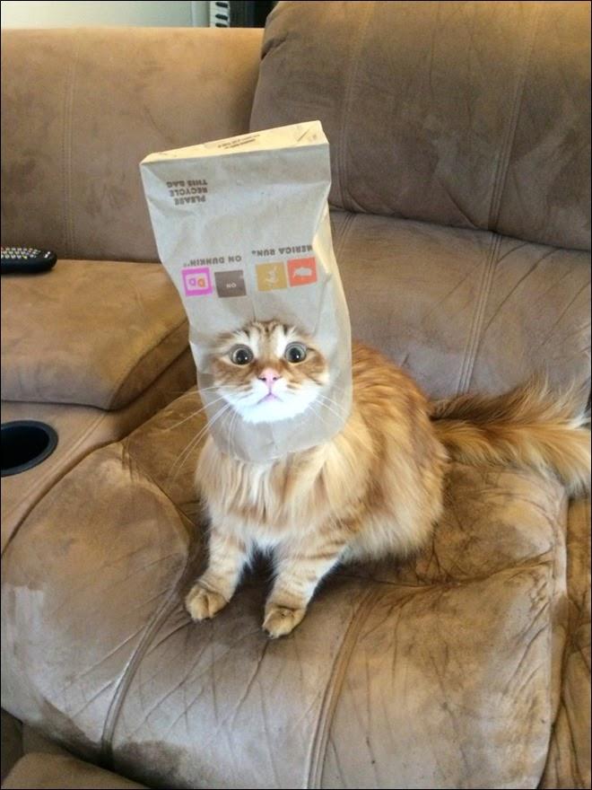 Foto de gatinho assustado