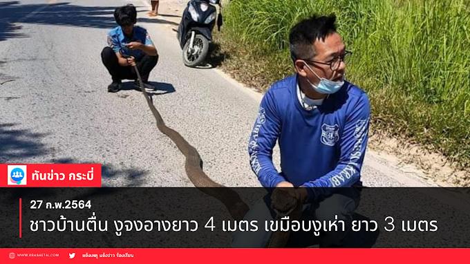 กระบี่-ชาวบ้านตื่น งูจงอางยาว 4 เมตร เขมือบงูเห่า ยาว 3 เมตร