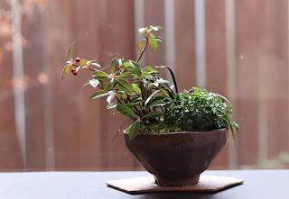 扇形の陶盤に載せられた茶色の鉢の山野草盆栽
