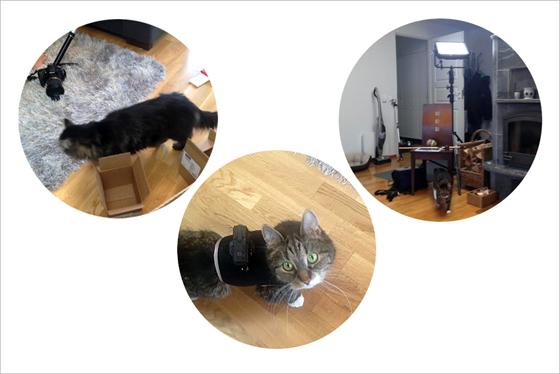 Kolme kuvaa rinnakkain joissa kissoja kuvausten keskellä ja go pro -kamera selässään.