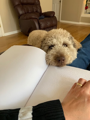 Anahit LaBarre sits reading a Braille book as Moka, a light tan labradoodle, looks on waiting to be petted