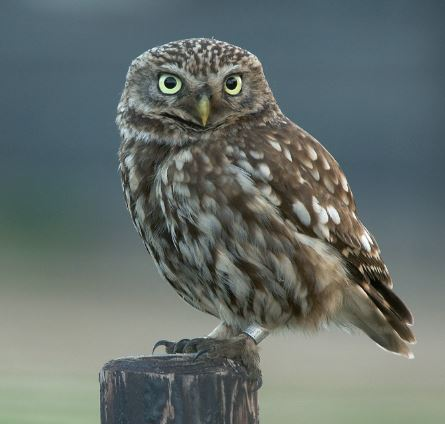 10 animals that can see at night
