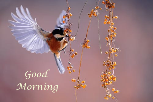 Good Morning All Wishes.