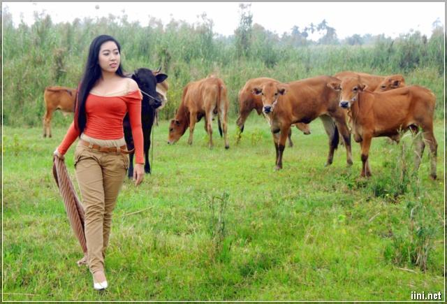 Cô gái chăn bò