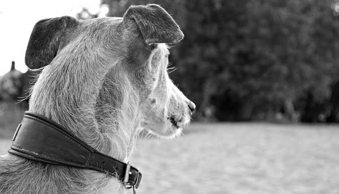 Câu chuyện cảm động: Hiểu lầm về chú chó