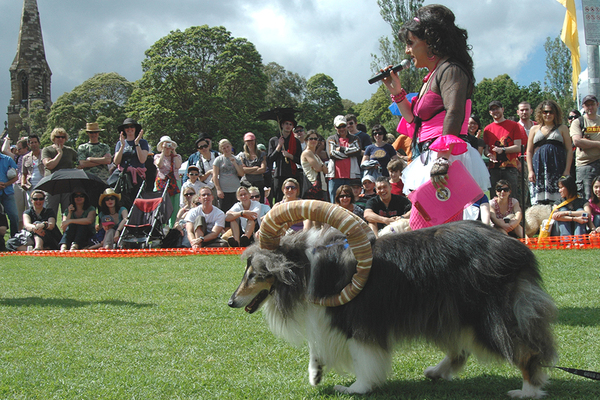Newtown-Festival-Dog-Show