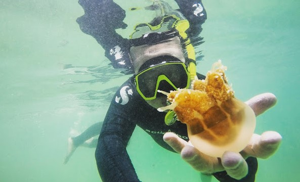 Wisata Danau Ubur-Ubur Pulau Kakaban di Kalimantan Timur