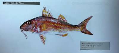 Salmonetes en las excursiones de pesca turismo y turismo marinero de Mallorca y Menorca