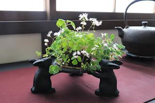 ツクシカラマツとスミレとミセバヤの山野草盆栽をウサギの五徳にのせている
