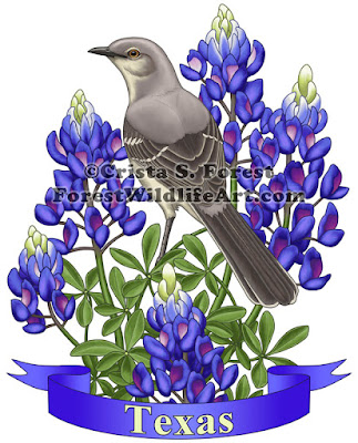 http://pixels.com/featured/texas-state-mockingbird-and-bluebonnet-flower-crista-forest.html