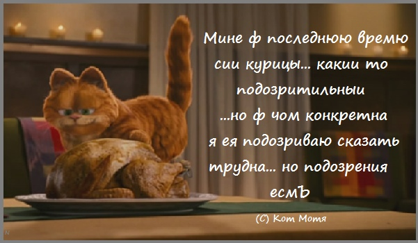 Блог Кота Моти  GryF6nmiD-I