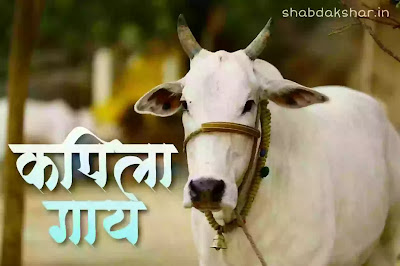 आमची कपिला गाय मराठी निबंध