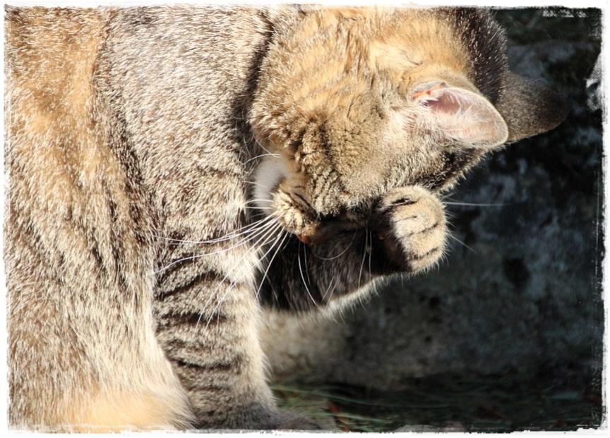 Bagaimana Cara Mengobati Kucing Sakit Demam? Berikut langkahnya