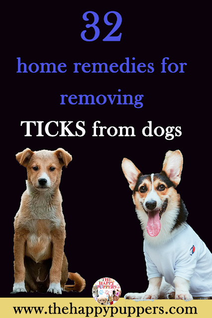 32 home remedies to eliminate ticks in dogs
