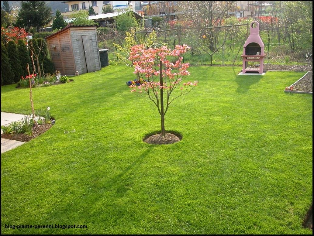 Piante Per Aiuole Perenni un giardino di perenni in ticino: cosa è cambiato
