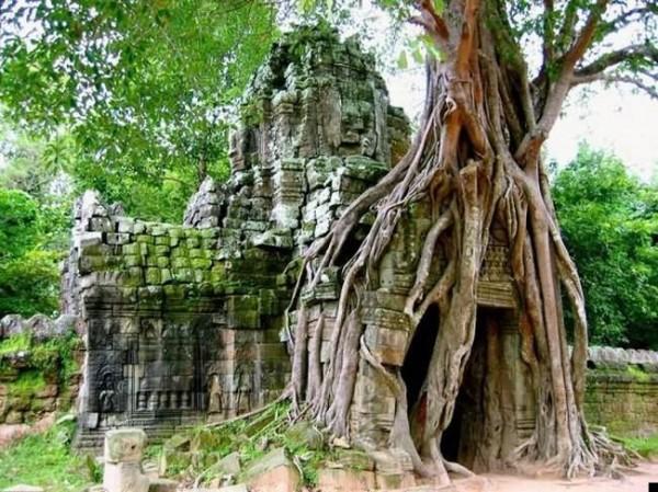 أشجار تبتلع كل ما يعترض نموها 11-600x449.jpg